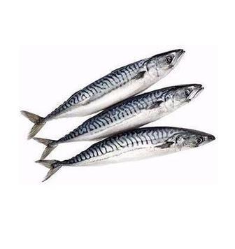 РИБА Скумбрія свіжоморожена 300-500, 1 кг